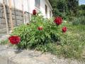 A takto nás pozdravovala zahrada každý den při odjezdu do Brna
